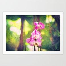 Orchid Impressions Art Print