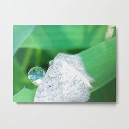 moth drinking a drop of water Metal Print