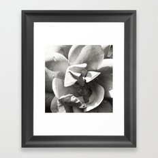 Black & White Rose Framed Art Print