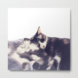 Cats again Metal Print
