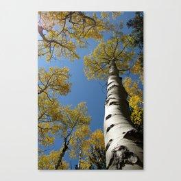 Golden Aspen, La Sal Mountains Canvas Print