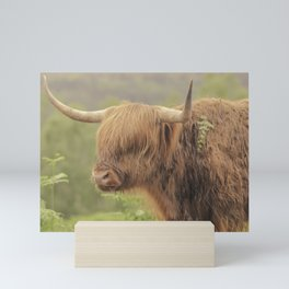 'Hamish' The Highland Cow Mini Art Print