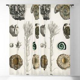 Naturalist Fossils Blackout Curtain