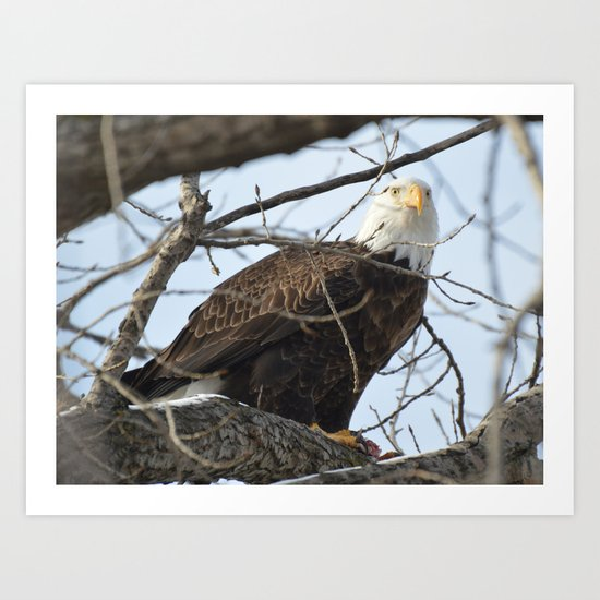 Eagles of Wisconsin 1 - A Wildlife Art Print Art Print