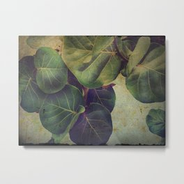 Sea Grape Metal Print