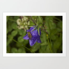 Bluebell Photography Print Art Print