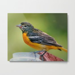 Happy Oriole Metal Print