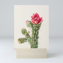 Walkingstick Cholla Cactus Watercolor, Mary Vaux Walcott Mini Art Print