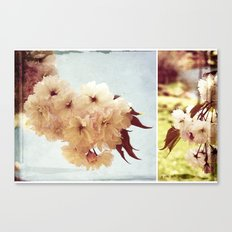 Cherry Blossom Dreaming Canvas Print