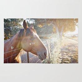 Horse Headsot Rug