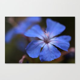 Forest Blue Canvas Print