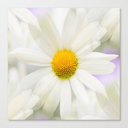 Daisy Flower Bouquet Pastel Color Background #decor #society6 #buyart Canvas Print
