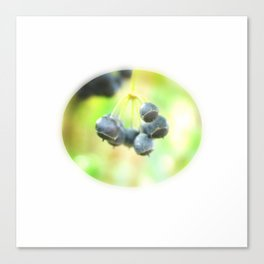 Tiny Berry Gem Canvas Print