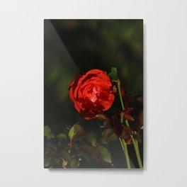 Deep red subject Metal Print