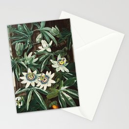 Robert John Thornton - The Passiflora Cerulea Stationery Cards