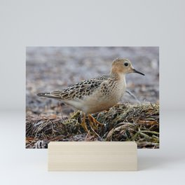 Profile of a Buff-Breasted Sandpiper Mini Art Print