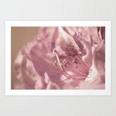filigree soft pink beauty Art Print