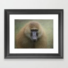 Guinea Baboon Framed Art Print