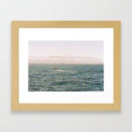 Sperm Whale Diving, Kaikoura, New Zealand Framed Art Print
