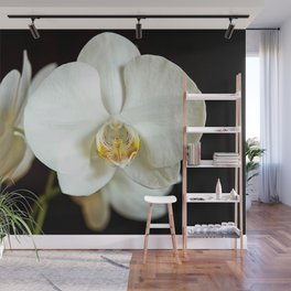 White Phalaenopsis Moth  Orchid Wall Mural
