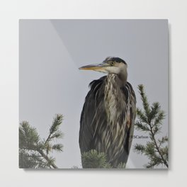 Tree Top Heron at Dawson Creek Park Metal Print