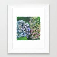 hydrangea Framed Art Prints featuring hydrangea by EnglishRose23