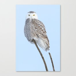 My kind of marshmallow Canvas Print