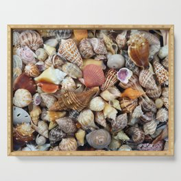Seashell Collection from Florida Serving Tray