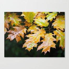 Fall Rain Canvas Print