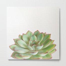 Green Succulent Metal Print