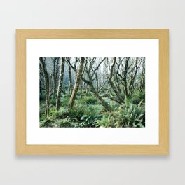 In The Forests at Cape Lookout Framed Art Print