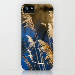Reeds in Camargue iPhone Case