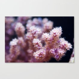 Fall Colors of the Sea Canvas Print