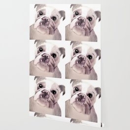 Bully Bull Dog Wallpaper