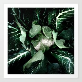 Cauliflower Art Print