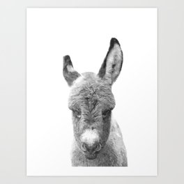 Black and White Baby Donkey Art Print