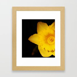 Old Narcissus Framed Art Print