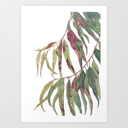 A touch of red - watercolour of eucalyptus branch Art Print