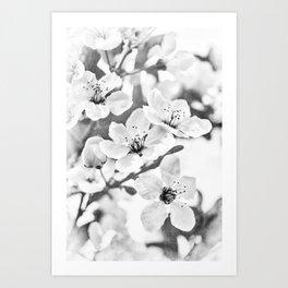 Fruit Or Flower? Art Print