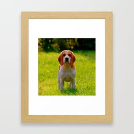 beagle puppy on guard Framed Art Print