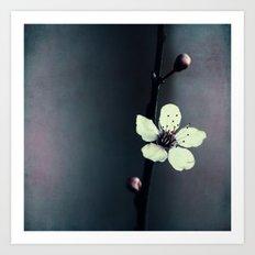 flower blossom Art Print