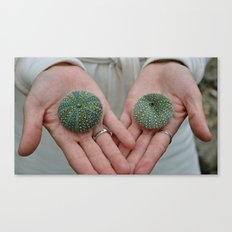 Sea Urchins in Hands Canvas Print