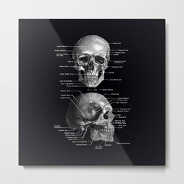 Skull Anatomy - Dark Version Metal Print