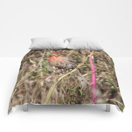 House Finch Comforters