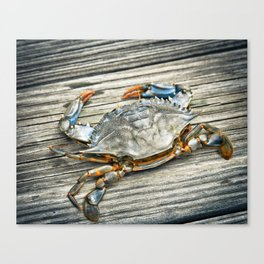 """Busted Peeler"" - Maryland Blue Crab Canvas Print"