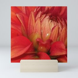 Red Dahlia Mini Art Print