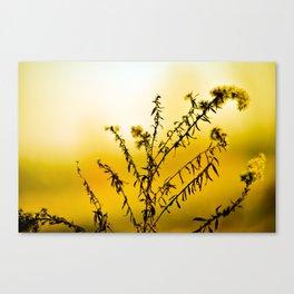 Lemon Yellow Sun Flower Canvas Print