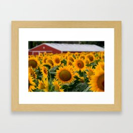 Red Barn and Sunflowers Framed Art Print