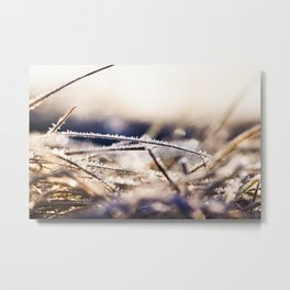 Green grass in the frost Metal Print