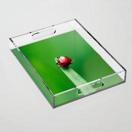 Balancing Acts Acrylic Tray